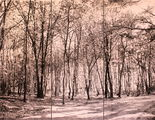 Woodland landscape with birches in Brabant Netherlands