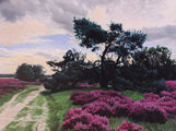 Heather landscape near Laren, Holland